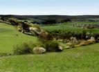 Abschnitt der Wanderroute Rheinsteig